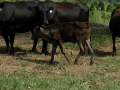 farm017